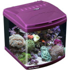 Aquatic Nature Evolution Purple