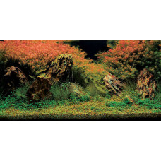 Aquatic Nature Foto Achterwand Inferno 80 x 40
